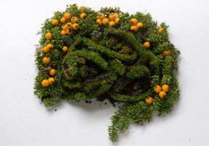 La digestion en automne - Naturopathie Toulouse