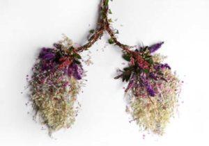 Stimuler les poumons en automne - Naturopathie Toulouse